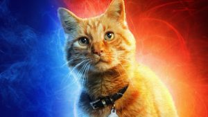 Captain Marvel Cat