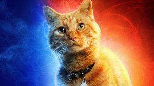 Captain Marvel Cat